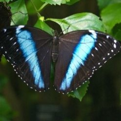 The Wonders of the Butterfly World