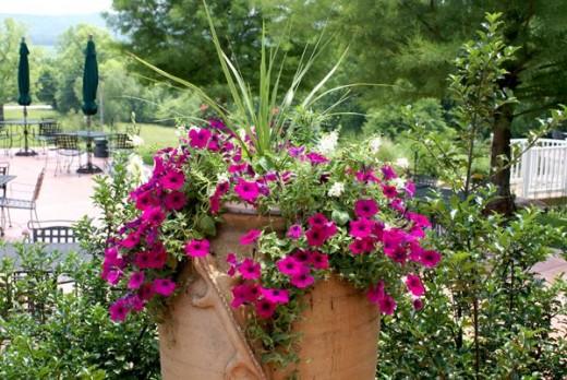 Petunias adorn one of the Outdoor Patios