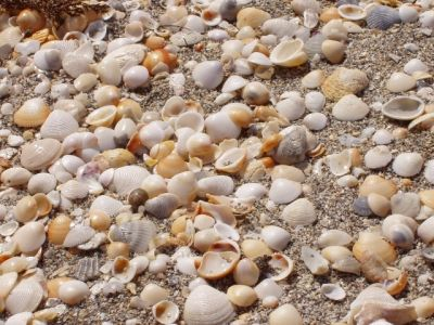 Shells at Coral Cove Beach