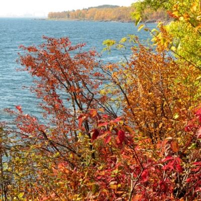 Bright Colored Foliage by Shore