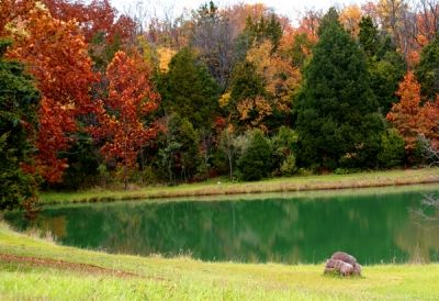 Fall Colors Reflected in a Small Pond
