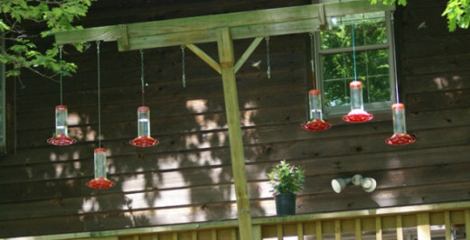 This shows the hummingbird feeders that were hung over the back deck.