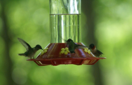 We were out on the deck all afternoon and there were always birds at the feeders.