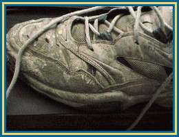 The Life of a Sneaker by D.F. Shapinsky (pingnews)