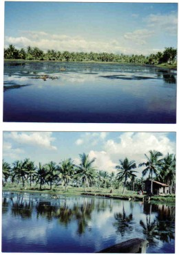 fishpond panorama