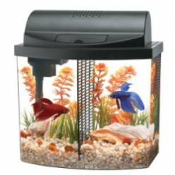 Best Fish Tank Aquariums for Home 2015