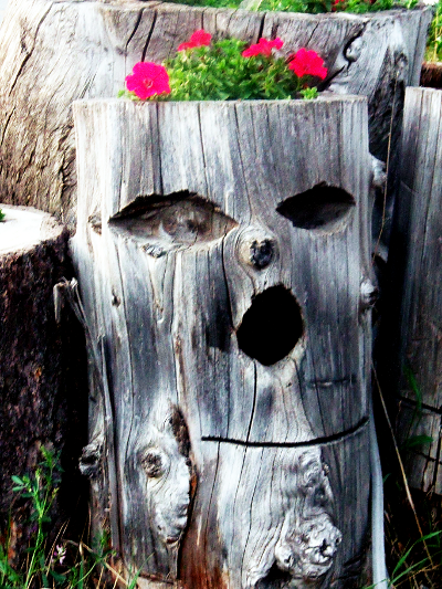 Chainsaw Sculptures And Wood Carvings Tree House Art Gallery Copyright © 2013 C. Johnson, Home Of A Thousand Faces, Radium BC. All Rights Reserved