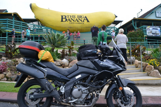 The world's most famous banana in Coffs Harbour.