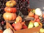 pumpkins in a variety of size, shape and colors
