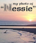 My Amazing Nessie Photo!