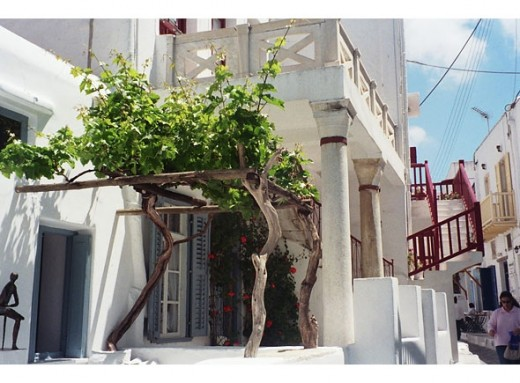 Another view of Mykonos' many winding streets. The grape trellis at left shades the entrance to a tiny art museum.