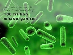 Best Probiotic Chews For Optimum Health in 2016