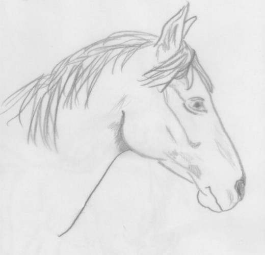 how to draw a realistic horse head
