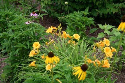 Native Perennial Butterfly Garden