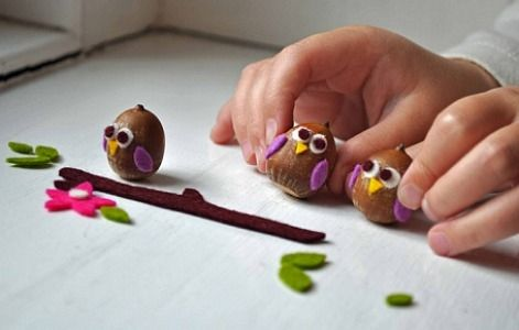 owl-acorns