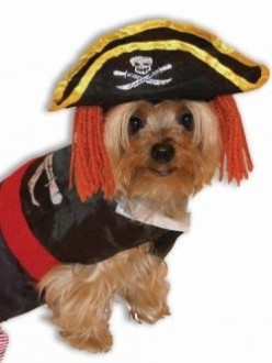 Henry The Pirate Dog