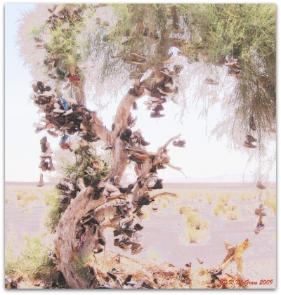 The Amboy Shoe Tree- a Cultural Icon in the Desert