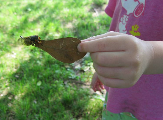 my daughter with a cicada