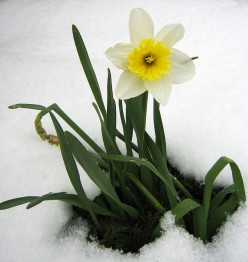 Spring time morning snow