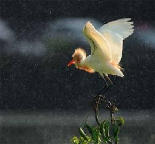 How to photograph flying birds