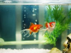 Aquarium Starter Kits: Reviews of Cheap Fish Tank Sets