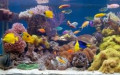 Five Inexpensive Saltwater Aquariums & Fish Tanks