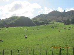 Sheep and Meadows