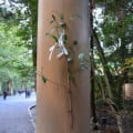 Myth and Faith Come to Life at Ise Grand Shrine