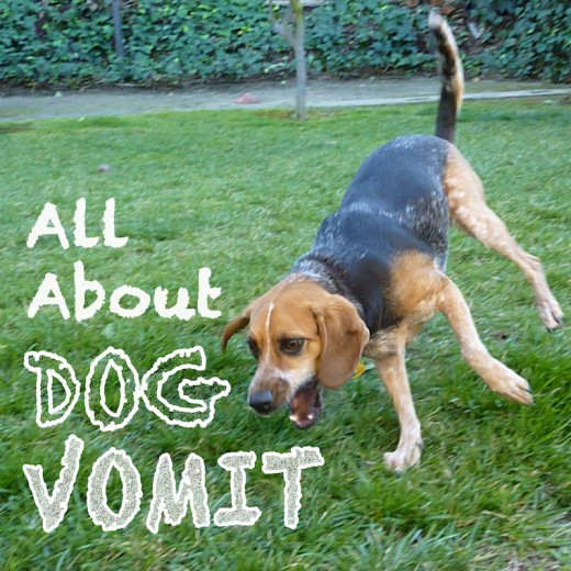 Yes, I sometimes write about dog vomit. I had fun with the font on this one.