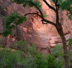 Riverside Walk in Zion National Park