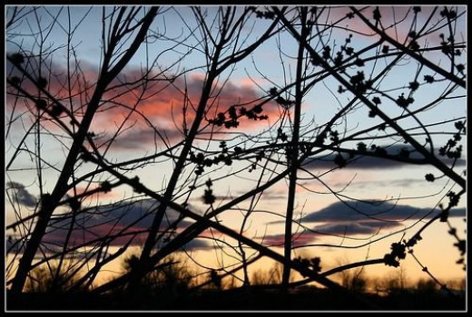 Sunset through the Branches on the Payette Greenbelt