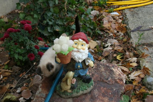 the kitten and the garden knome