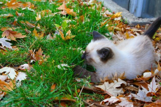 kitten smelling more grass