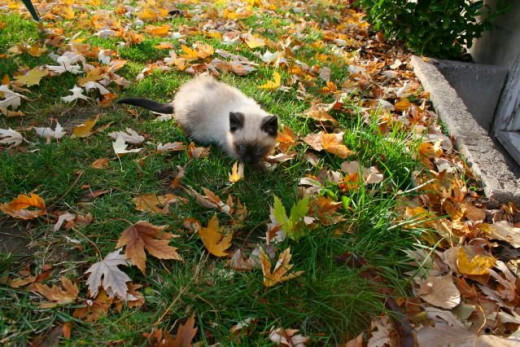 kitten in the leaves