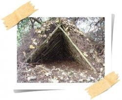 Wilderness Shelter