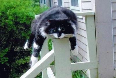 I wish I had a cat tree!