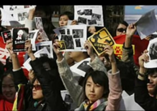 Chinese People Protesting Dog Cull