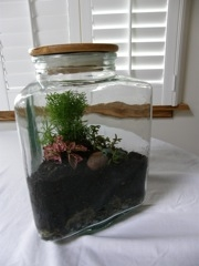 Triangle jar terrarium