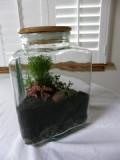 Triangle jar terrarium