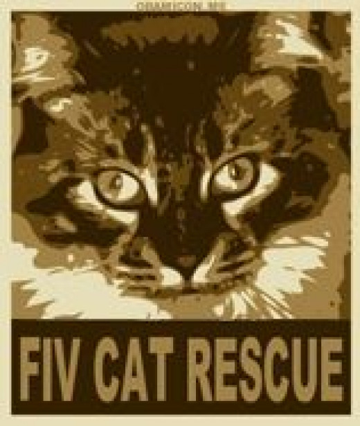 FIV CAT RESCUE