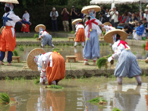 This is my host sister participating in a sacred rice-planting ceremony in Hikone.