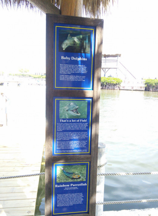 Every lagoon has informational signs, including facts about the dolphins and their environment.