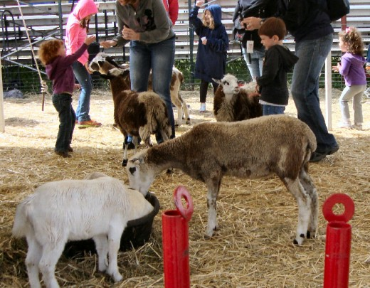 "The ""Petting Zoo"" area was very popular"