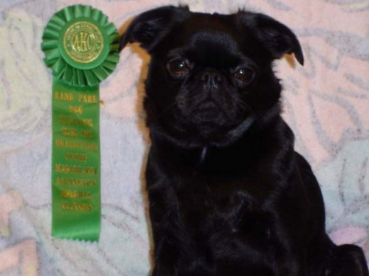 Roc's first obedience qualifying ribbon.