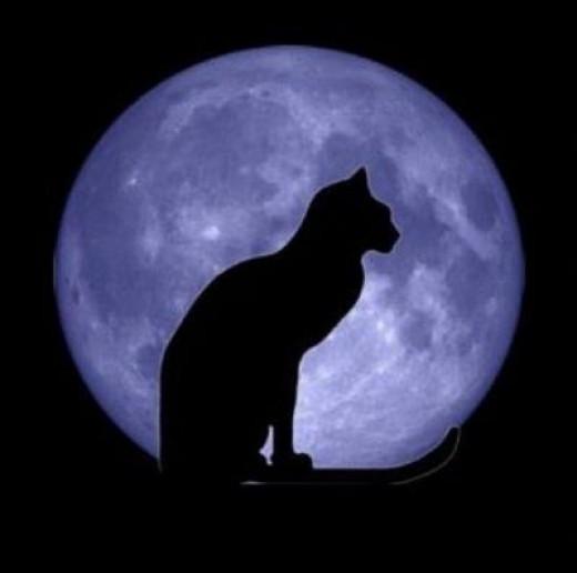 Blue Moon were cat