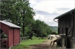 White Horse Farm Horses