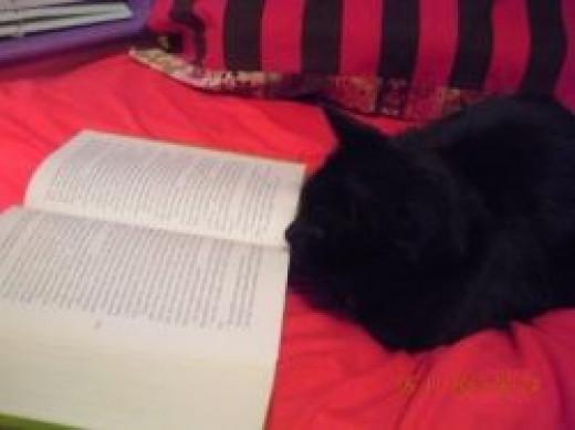 Sully Reads ©Kim  Marie Ostrowski