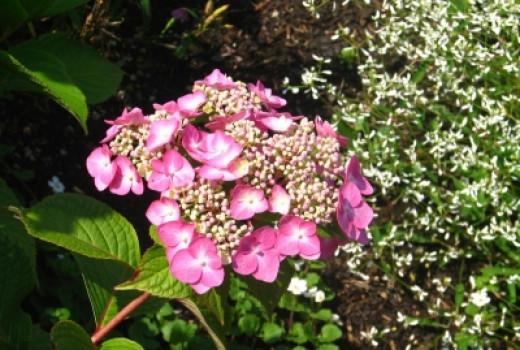 Pink Flower At Wellfield Garden