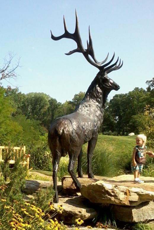 A young visitor enjoys Roosevelt elk
