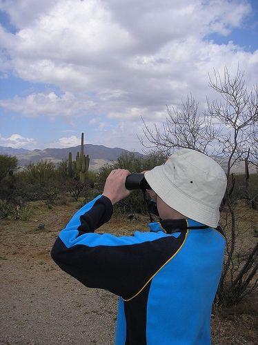 Saguaro National Park - Bird Watching
